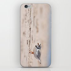Great Lakes Piping Plover iPhone & iPod Skin