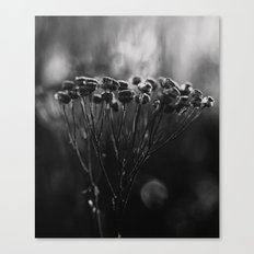 cold still life Canvas Print