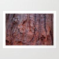 Redwood Art Print