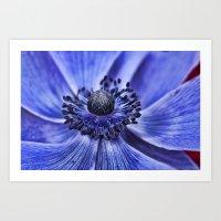 Purple Anemone 2 Art Print