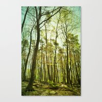 spring woods II Canvas Print