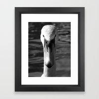 Swan Portrait 5 Framed Art Print