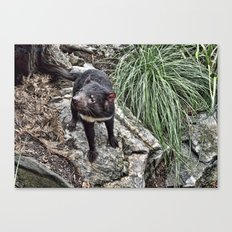 Tazzy Devil Canvas Print