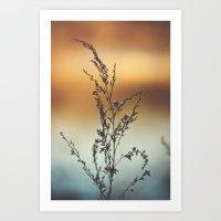 Colorful Sunset Reflection Art Print