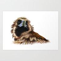 Black Vulture Art Print