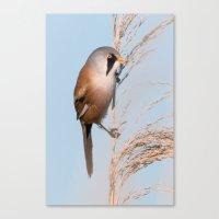 Bearded Tit Canvas Print