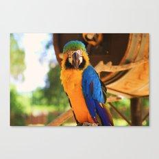 ~Bird Beauty~ Canvas Print
