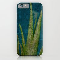iPhone & iPod Case featuring Aloe  by AmberRinaldi