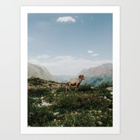Bighorn Overlook Art Print
