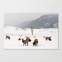 Herd Of Elk In Wyoming O… Canvas Print