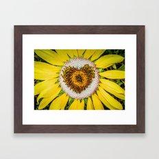 Sunflower of Love Framed Art Print