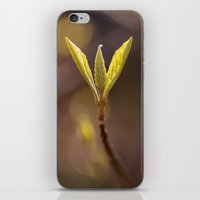 Spring Bud iPhone & iPod Skin