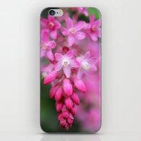 Ribes sanguineum iPhone & iPod Skin