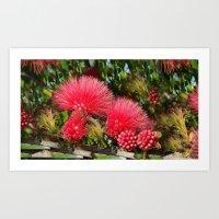 Wild Fluffy Red Flowers Art Print