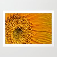 Sunflower 5 Art Print