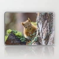 Baby Red Squirrel  Laptop & iPad Skin