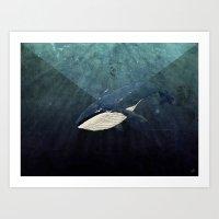 Everett's Whale Art Print