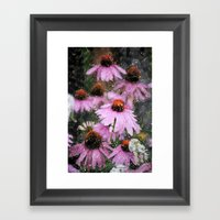 Cone Flowers Framed Art Print
