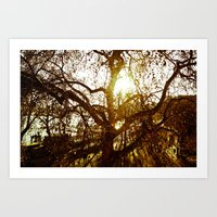 Tree see-through.... Art Print