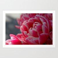Pinky  Art Print