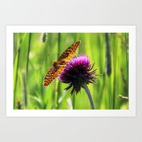 Great Spangled Fritillar… Art Print