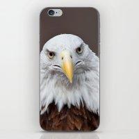 Bald Eagle Face iPhone & iPod Skin