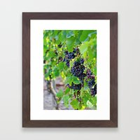 Newport Vineyards Framed Art Print