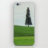 Lone Spruce iPhone & iPod Skin