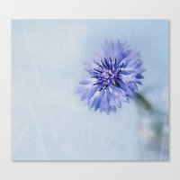 Cornflower Dreams Canvas Print