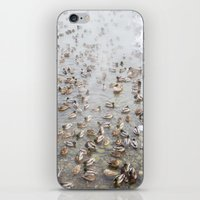 Mallard Ducks iPhone & iPod Skin