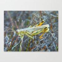 Grasshopper 2011 Canvas Print