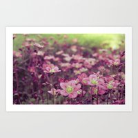 Pink Saxifrage Art Print