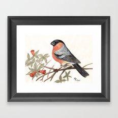 Eurasian Bullfinch Bird Framed Art Print