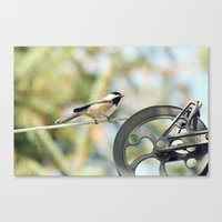 Chick on a line Canvas Print