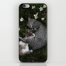 Sleep [A CAT AND A KITTEN] iPhone & iPod Skin