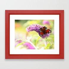 pastel peacock (butterfly) Framed Art Print