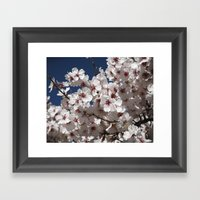 Almond Blossom Framed Art Print