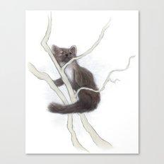 Pine Marten 2 Canvas Print