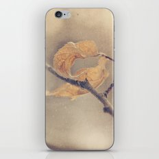 curled up iPhone & iPod Skin