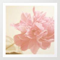 Peony Bloom Art Print
