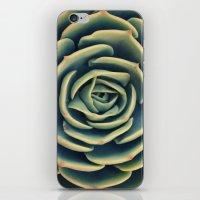 Echeveria X Imbricata Su… iPhone & iPod Skin