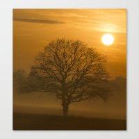 Oak Tree Winter Time Canvas Print