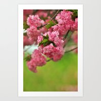 Cherry Orchard Art Print