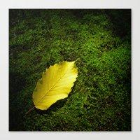 yellow autumn leaf I Canvas Print