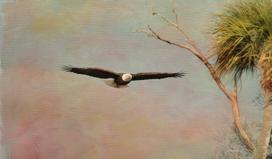 Eagle Soft Glide Art Print
