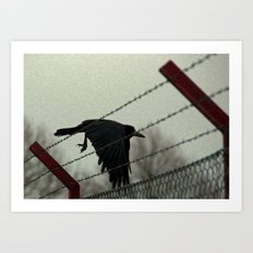 No fences can hold me Art Print