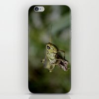 Grasshopper Close Up iPhone & iPod Skin