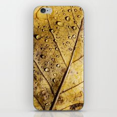 yellow leaf with drops iPhone & iPod Skin