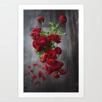 Red, Red Ranunculus Art Print