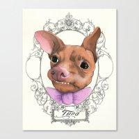 Chihuahua - Tuna  Canvas Print